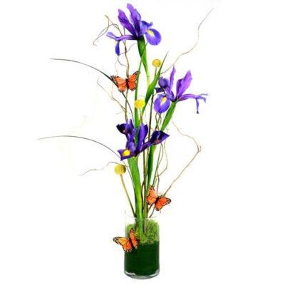 iris splendor